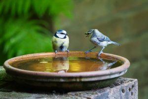 conversation, talk, bird-3513843.jpg